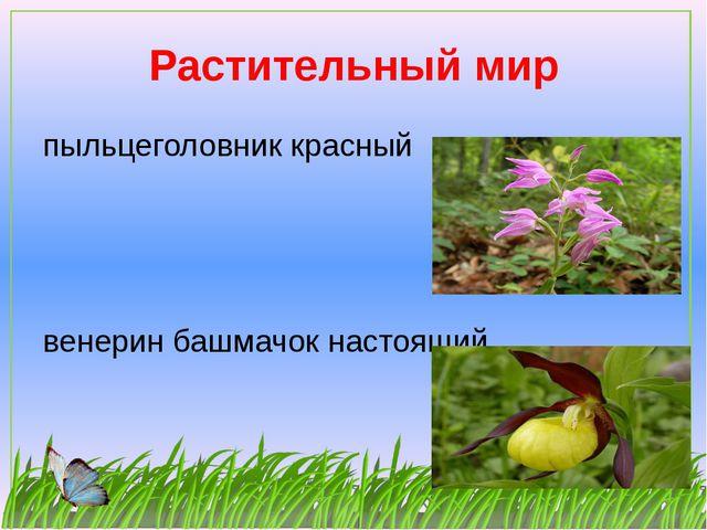 Растительный мир пыльцеголовник красный венерин башмачок настоящий