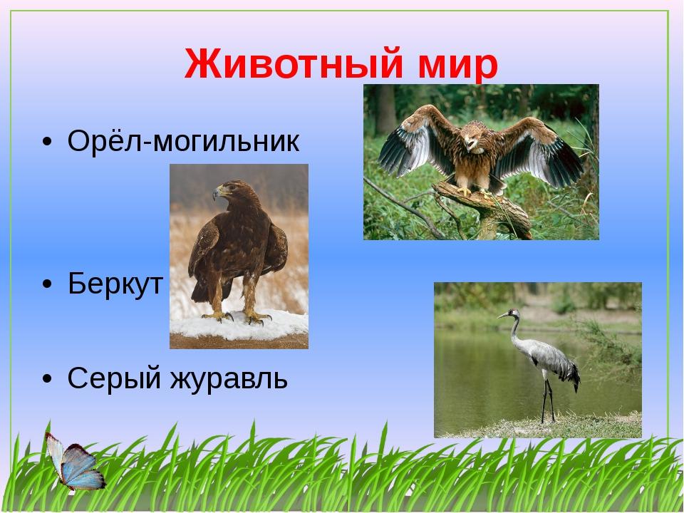 Животный мир Орёл-могильник Беркут Серый журавль