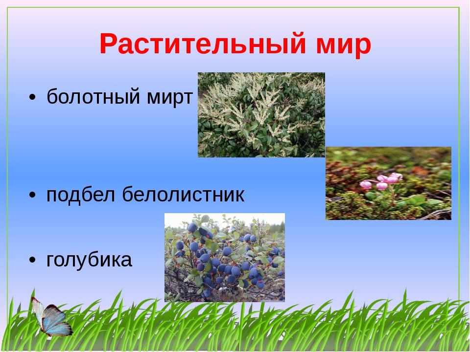Растительный мир болотный мирт подбел белолистник голубика