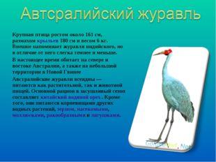 Крупная птица ростом около 161см, размахомкрыльев180см и весом 6кг. Внеш