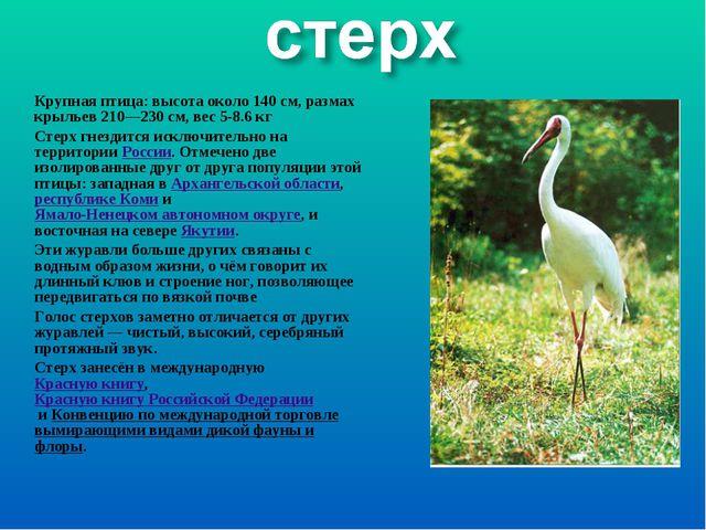 Крупная птица: высота около 140см, размах крыльев 210—230см, вес 5-8.6кг С...
