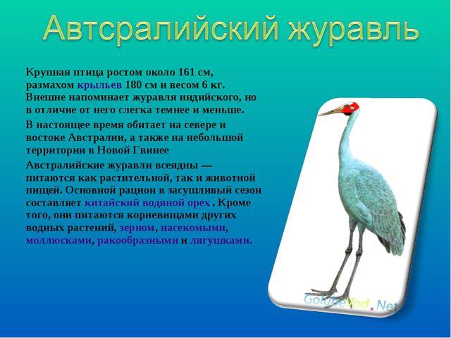 Крупная птица ростом около 161см, размахомкрыльев180см и весом 6кг. Внеш...