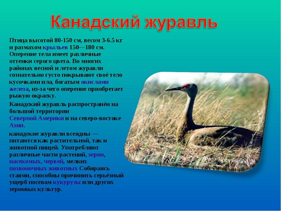 Птица высотой 80-150см, весом 3-6.5кг и размахомкрыльев150—180см. Оперен...