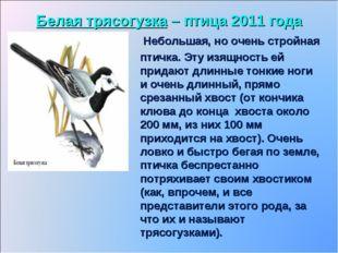 Белая трясогузка – птица 2011 года Небольшая, но очень стройная птичка. Эту и