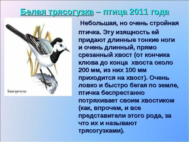 Белая трясогузка – птица 2011 года Небольшая, но очень стройная птичка. Эту и...