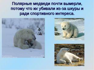 Полярные медведи почти вымерли, потому что их убивали из-за шкуры и ради спор