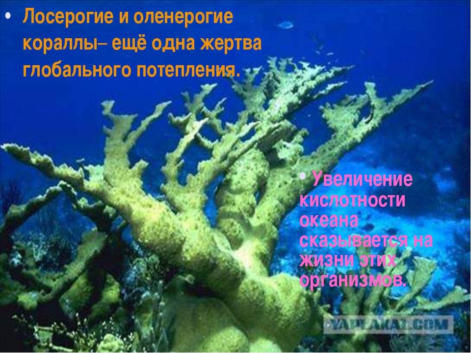 Лосерогие и оленерогие кораллы– ещё одна жертва глобального потепления. Увели...