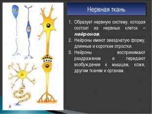 Нервная ткань Образует нервную систему, которая состоит из нервных клеток – н