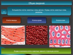 Общие сведения 4 Большинство клеток животных очень мелкие. Формы клеток живот