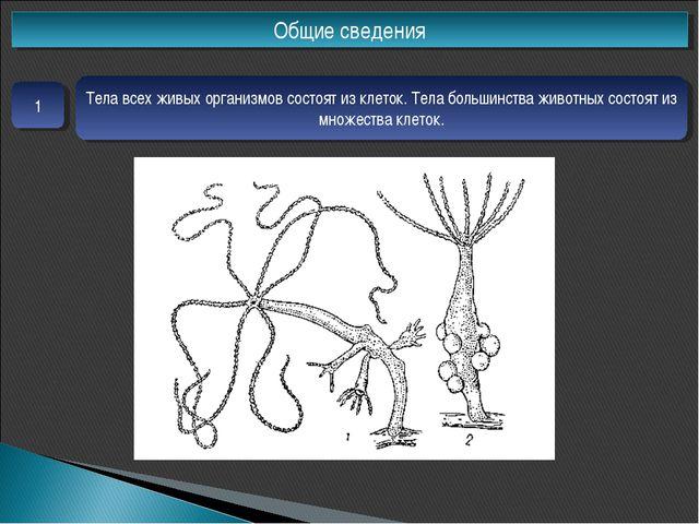 Общие сведения 1 Тела всех живых организмов состоят из клеток. Тела большинст...