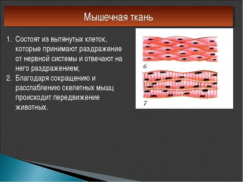Мышечная ткань Состоят из вытянутых клеток, которые принимают раздражение от...