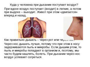 Куда у человека при дыхании поступает воздух? При вдохе воздух поступает (вх