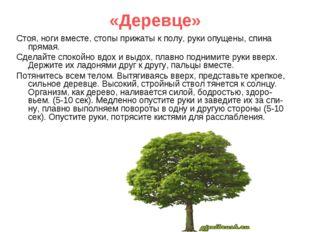 «Деревце» Стоя, ноги вместе, стопы прижаты к полу, руки опущены, спина прямая