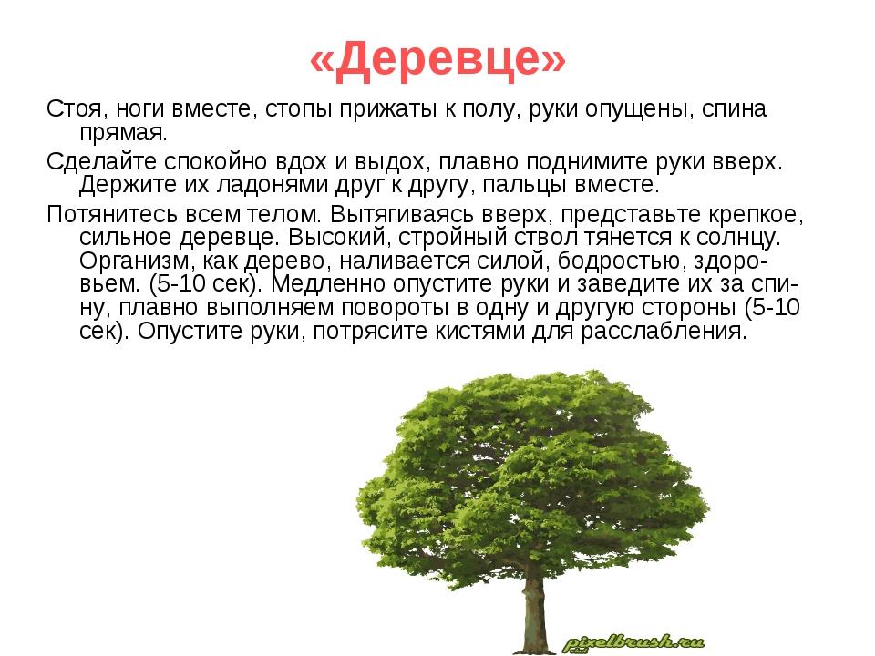 «Деревце» Стоя, ноги вместе, стопы прижаты к полу, руки опущены, спина прямая...