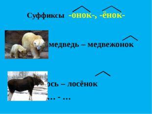 Суффиксы -онок-, -ёнок-  медведь – медвежонок   лось – лосёнок