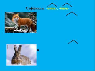 Суффиксы -онок-, -ёнок-  лиса – лисёнок … - …  заяц