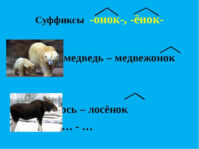 Суффиксы -онок-, -ёнок-  медведь – медвежонок   лось – лосёнок...