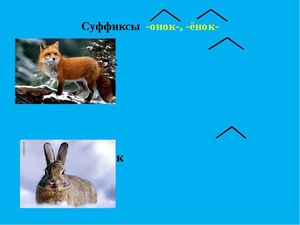 Суффиксы -онок-, -ёнок-  лиса – лисёнок … - …  заяц...