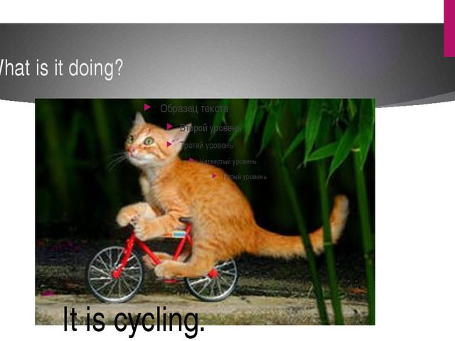 What is it doing? It is cycling.