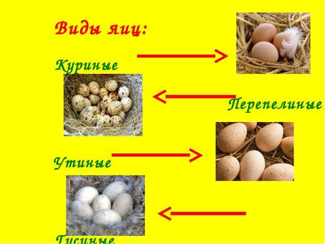 Виды яиц: Куриные Перепелиные Утиные Гусиные