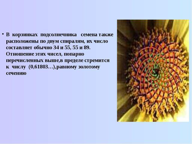 В корзинках подсолнечника семена также расположены по двум спиралям, их число...