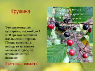 Крушина Это древовидный кустарник, высотой до 7 м. В зрелом состоянии плоды с