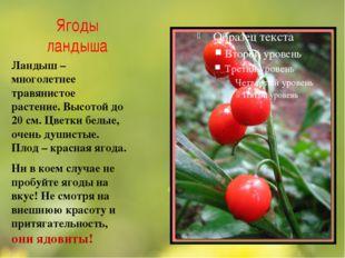 Ягоды ландыша Ландыш – многолетнее травянистое растение. Высотой до 20 см. Цв