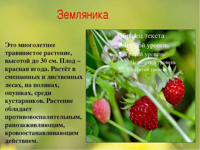 Земляника Это многолетнее травянистое растение, высотой до 30 см. Плод – крас...