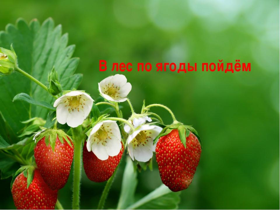 В лес по ягоды пойдём