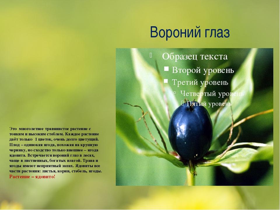 Вороний глаз Это многолетнее травянистое растение с тонким и высоким стеблем....
