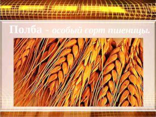 Полба - особый сорт пшеницы.
