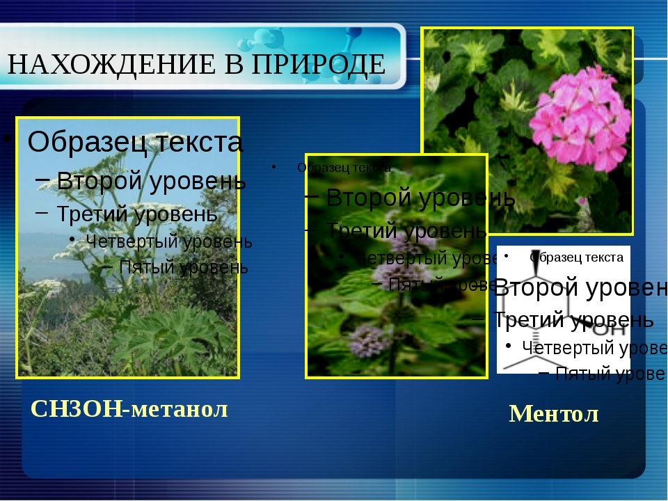 НАХОЖДЕНИЕ В ПРИРОДЕ СН3ОН-метанол Ментол