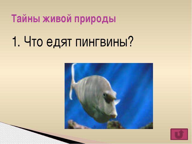 Растения цветника Темы финального раунда Насекомые Мальчики Космо-star Ядовит...