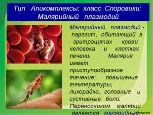Тип Апикомплексы; класс Споровики; Малярийный плазмодий Малярийный плазмодий