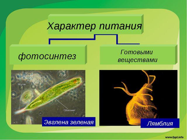 Эвглена зеленая Лямблия