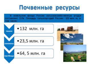 В земельном фонде России сельскохозяйственные угодья составляют 13 %. Площад