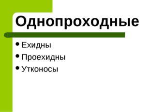 Однопроходные Ехидны Проехидны Утконосы