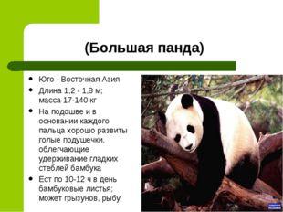 (Большая панда) Юго - Восточная Азия Длина 1,2 - 1,8 м; масса 17-140 кг На по