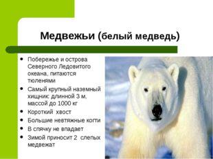 Медвежьи (белый медведь) Побережье и острова Северного Ледовитого океана, пит