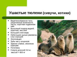 Ушастые тюлени (сивучи, котики) Веретенообразное тело, укороченные конечности
