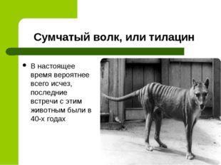 Сумчатый волк, или тилацин В настоящее время вероятнее всего исчез, последние
