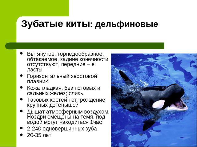Зубатые киты: дельфиновые Вытянутое, торпедообразное, обтекаемое, задние коне...