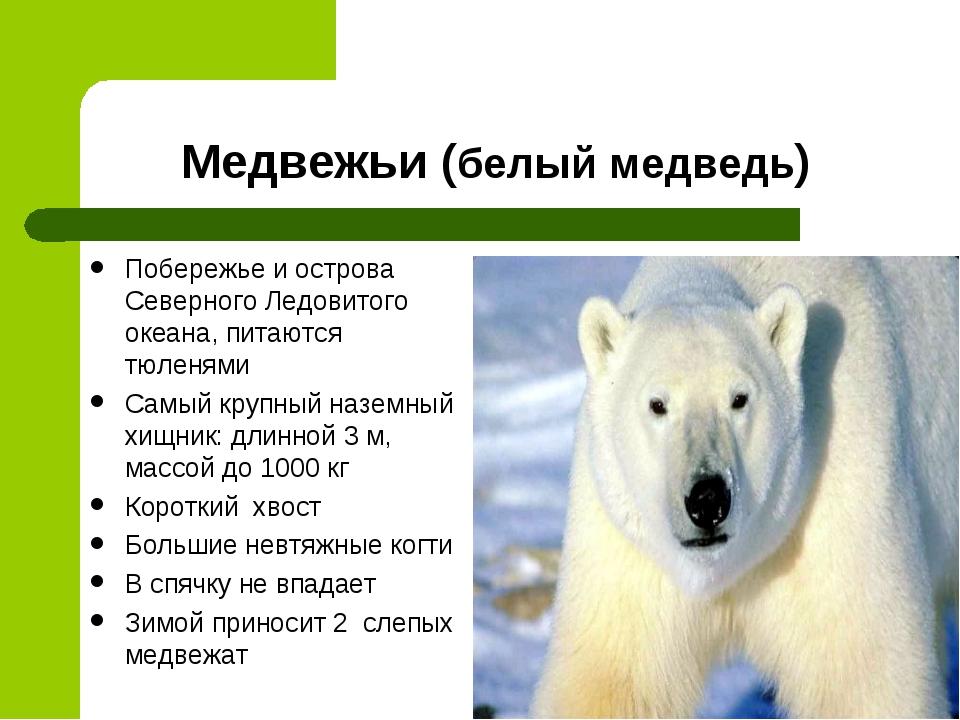 Медвежьи (белый медведь) Побережье и острова Северного Ледовитого океана, пит...
