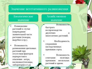 Значение вегетативного размножения Биологическое значение Хозяйственное значе