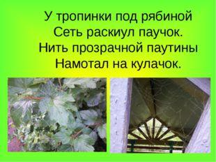 У тропинки под рябиной Сеть раскиул паучок. Нить прозрачной паутины Намотал н