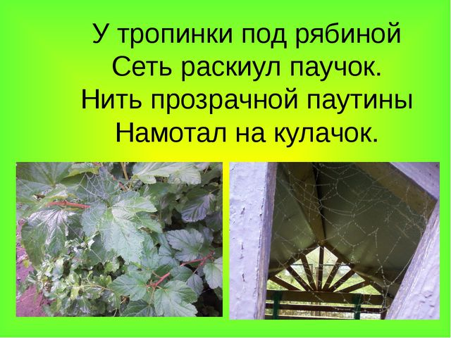 У тропинки под рябиной Сеть раскиул паучок. Нить прозрачной паутины Намотал н...