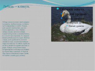 Орлан – белохвост. Союз охраны птиц России объявил орлана-белохвоста птицей 2
