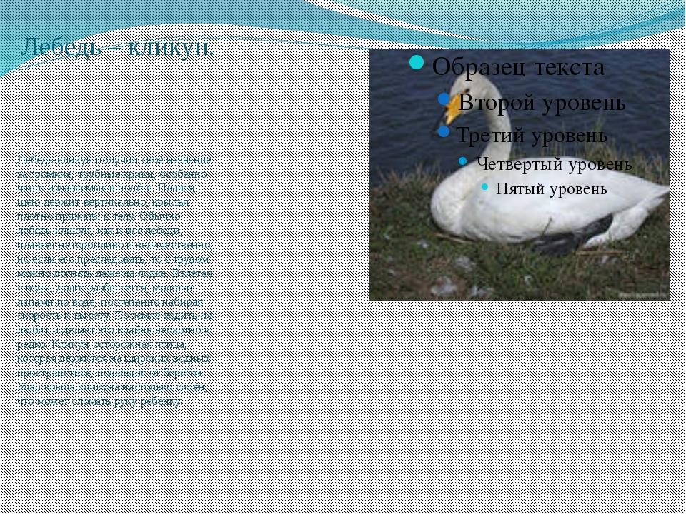 Орлан – белохвост. Союз охраны птиц России объявил орлана-белохвоста птицей 2...
