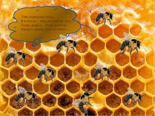 Там узорчатые соты, В клетках - мёд, пчелиный труд… Тесно, жарко… Тьма работ