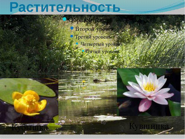 Растительность Кубышка Кувшинка